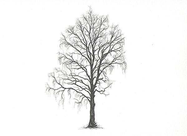 dave ball tree drawings