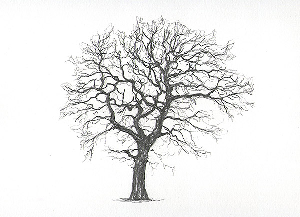 dave ball tree drawings